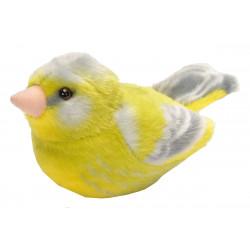 Pájaro con sonido verderol